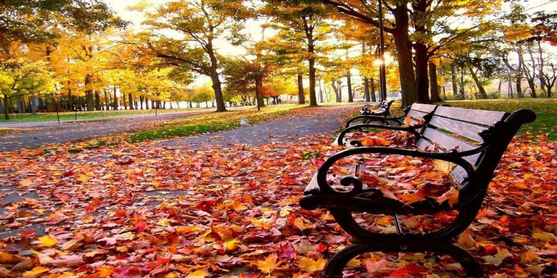 O Outono pela Medicina Tradicional Chinesa