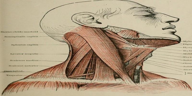 Estimulação de todas as funções do corpo utilizando os microssistemas do Pescoço, Tórax e Abdome