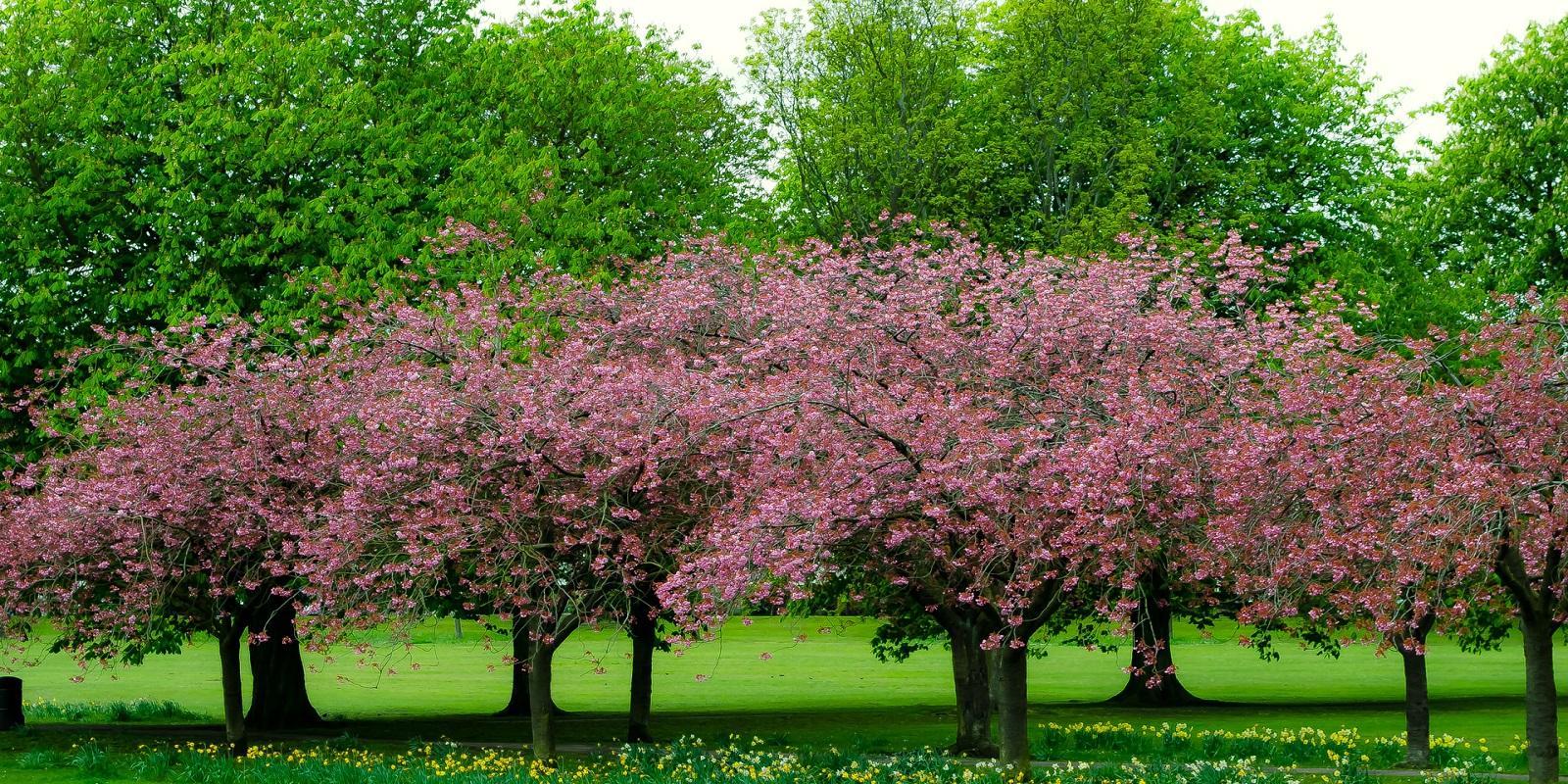 Primavera: estudando sua influência sobre a saúde do homem.